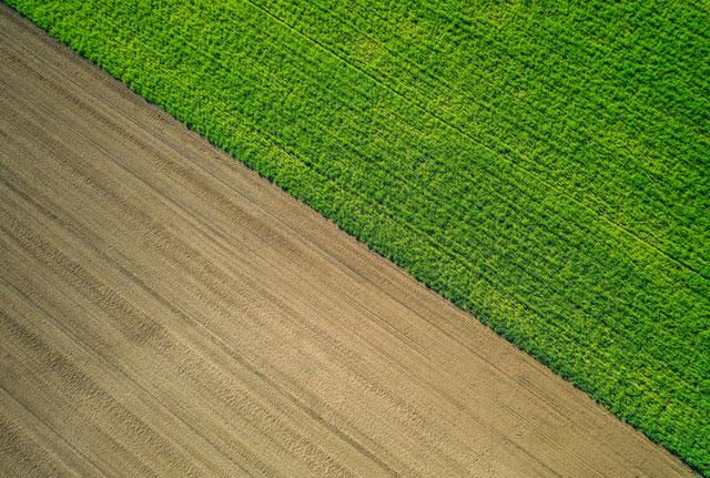 Dlaczego można zaufać naszym zabiegom herbicydowym na żyto