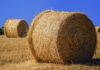 Nowoczesne zabiegi herbicydowe na żyto